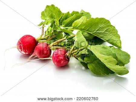 Three whole red radish with fresh green leaves isolated on white background