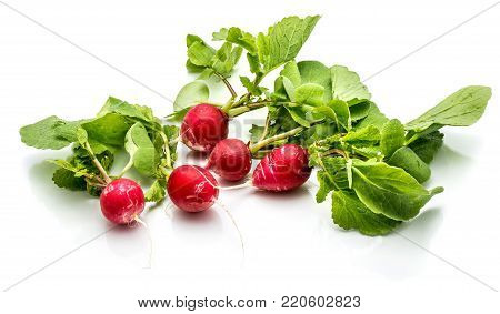 Five whole red radish with fresh green leaves isolated on white background