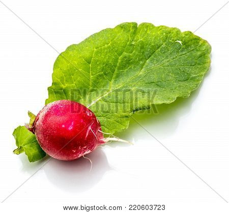 One whole red radish on fresh green leaf isolated on white background
