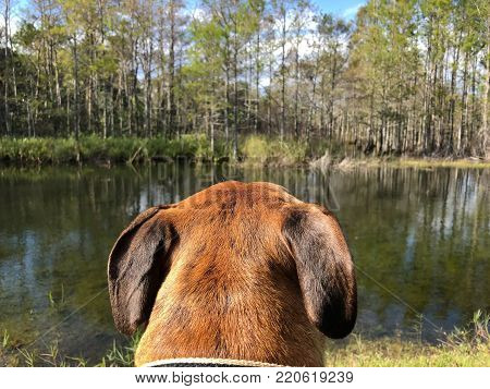 Rear View Of Dog Head