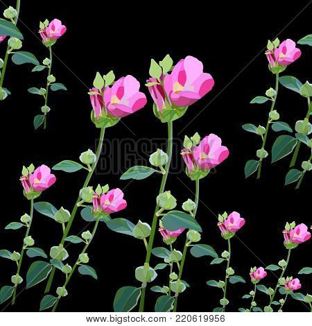 Beautiful floral pattern with pink malvas on black background.