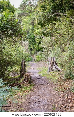 Trail through Little Waterloo Bay campsites in Wilsons Promontory, Australia