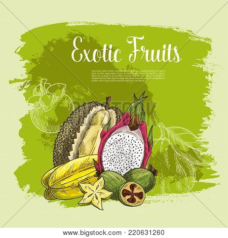 Fresh exotic fruits poster for fruit shop. Vector harvest of tropical durian, carambola star fruit or feijoa and juicy dragon fruit pithaya, mangosteen or rambutan and citrus grapefruit or pomelo