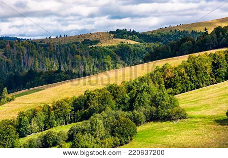 forested rolling hill on a cloudy day. lovely nature scenery of mountainous countryside. gorgeous weather early in the autumn