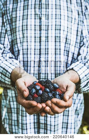 Organic fruit. Farmers hands with freshly harvested fruit. Fresh organic berries.