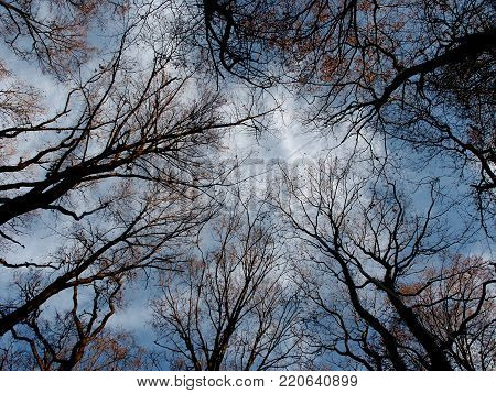 a glimpse of the blue sky and intertwined branches of trees
