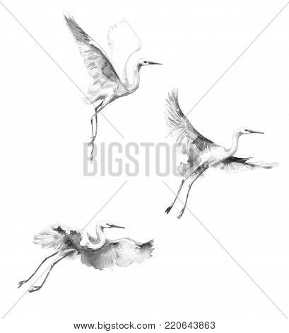 Watercolor painting.  Hand drawn illustration. White flying storks isolated on blank background. Bird flight monochrome aquarelle sketch.
