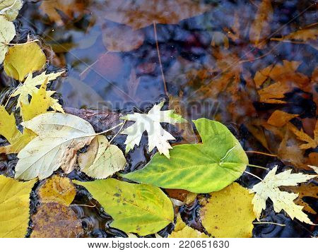 autum reflection in water leaves twigs yellow