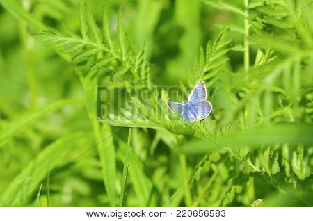 blue butterfly sitting on green grass under the bright warm summer sun vivid colorful background insect wallpaper backdrop texture
