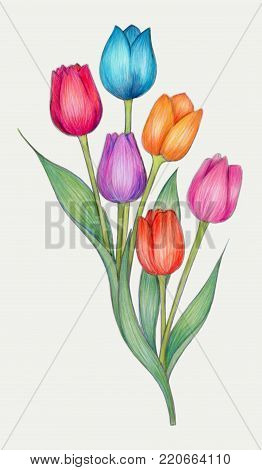 Colorful drawing of tulips made with colored pencils on archival polyester film.