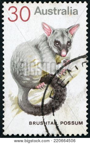 AUSTRALIA - CIRCA 1974: a stamp printed in the Australia shows Common Brushtail Possum, Trichosurus Vulpecula, Marsupial Mammal, circa 1974