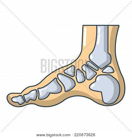 Xray of foot icon. Cartoon illustration of xray of foot vector icon for web.