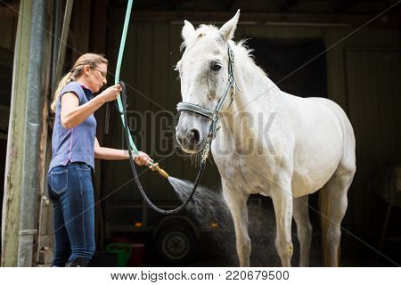 Woman showering her horse on a horse ranch