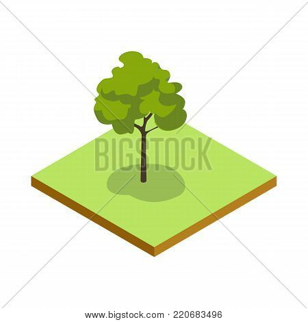 Park plant and green grass isometric 3D icon. Decorative tree vector illustration. Nature map element for summer parkland landscape design.
