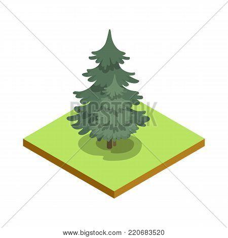 Pine tree isometric 3D icon. Public park plant and green grass vector illustration. Nature map element for summer parkland landscape design.