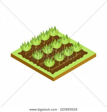 Seedlings on bed isometric 3D icon. Public park plant and green grass vector illustration. Nature map element for summer parkland landscape design.