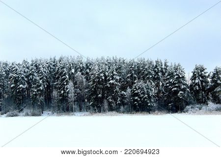 Winter forest. Northern nature. Spruce and fires in the snow. The snow on the trees. The snow on the branches. Snow forest. Winter lake. Russian winter forest. Christmas mood. The ice on the water. Beautiful winter landscape