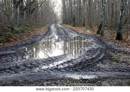 Muddy road in a deciduous forest at the swedish island Oland