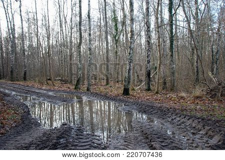 Country road with puddles in a rural landscape at the swedish island Oland