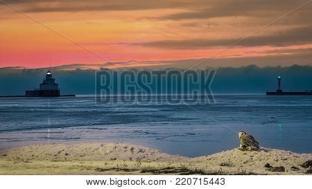 A snow owl sits on a seagull just killed as the sun rises over the lighthouses of Manitowoc, Wisconsin.