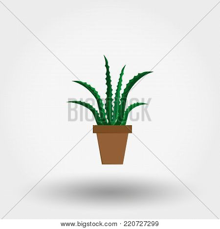 Succulent plant in a flowerpot. Houseplant. Icon for web and mobile application. Vector illustration on a white background. Flat design style.