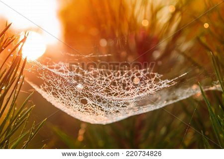 Blurred Gold Spider Web With Water Drop On Autumn Morning Background With Sun Light Flare