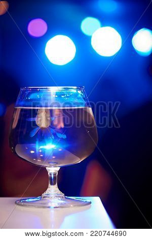 Glass with fish in water on a blue background