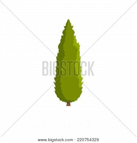 Cypress tree icon. Flat illustration of cypress tree vector icon isolated on white background