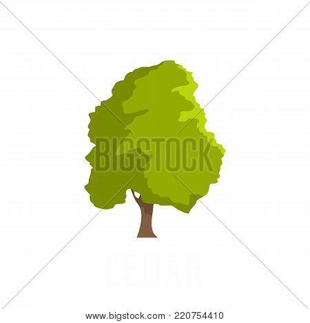 Cedar tree icon. Flat illustration of cedar tree vector icon isolated on white background