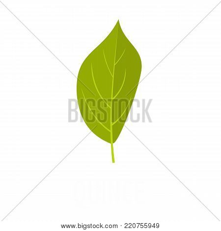Quince leaf icon. Flat illustration of quince leaf vector icon isolated on white background