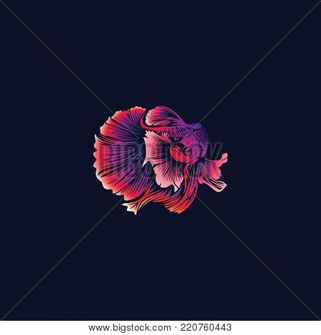 vector beauty of betta fish with beautiful colors are also interesting and the tail is grooved.