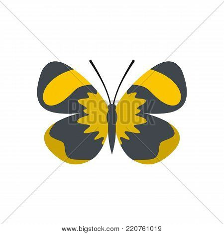 Small butterfly icon. Flat illustration of small butterfly vector icon isolated on white background