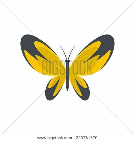 Wide wing butterfly icon. Flat illustration of wide wing butterfly vector icon isolated on white background