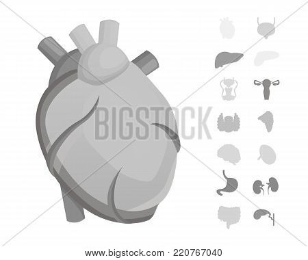 Cartoon human organs vector set . Anatomy of body. Reproductive system, heart, lungs, brain illustrations.