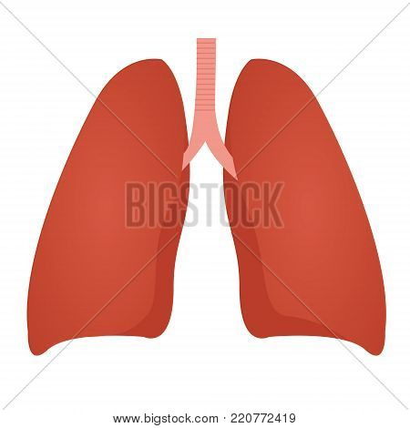Lung anatomy colorful drawing on a white background