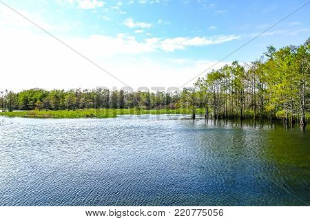 wind makes ripples on the calm cypress swamp lake