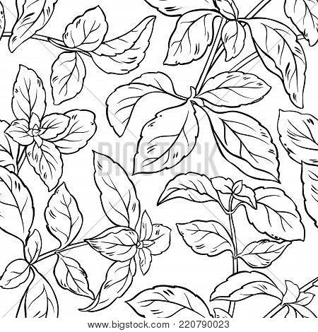 basil herb seamless pattern on white background