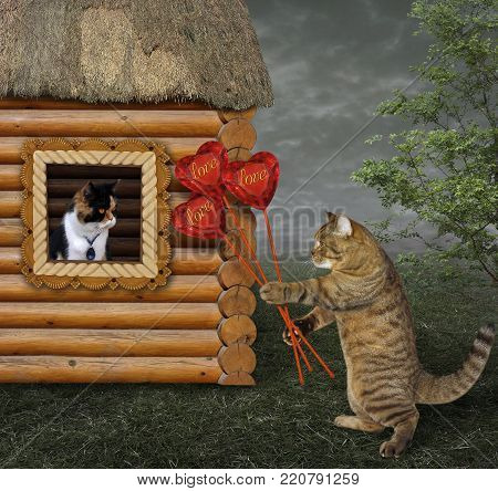 The cat gives a bouquet of ruby hearts to his beloved in the village.