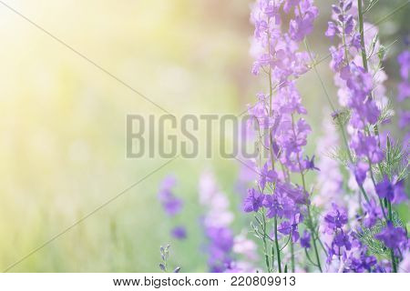 Background from tender soft violet blue beautiful flowers, floral magic shiny background