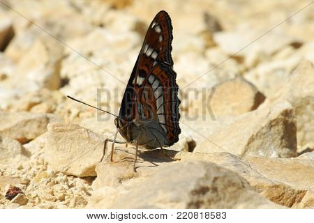 Butterfly with closed wings on the ground during sunny day