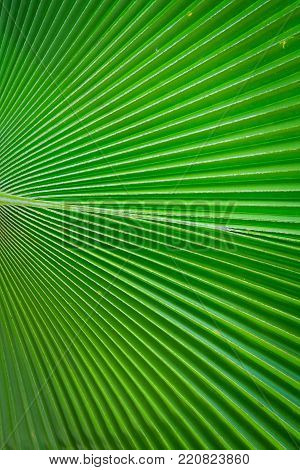 Green leaf background texture in natural light