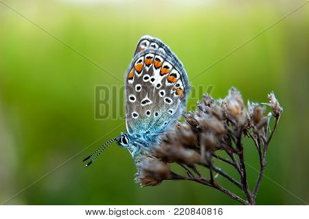 Beautiful Butterfly Sitting On Flower And Feeding. Macro Detail Of Tiny Creature. Spring Season, Cze