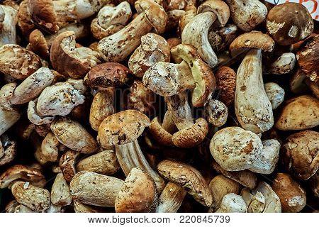 Fresh porcini mushroom, edible boletus edulis at the organic farmer market in Europe.