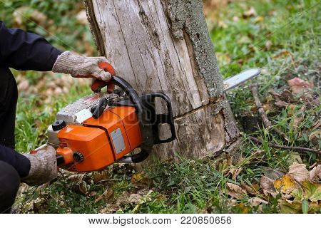 Man cutting tree with a orange chainsaw in his hands