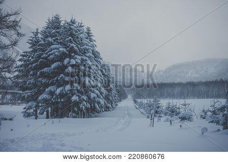 Snowy trail up Mount Shiribetsu in Hokkaido, Japan