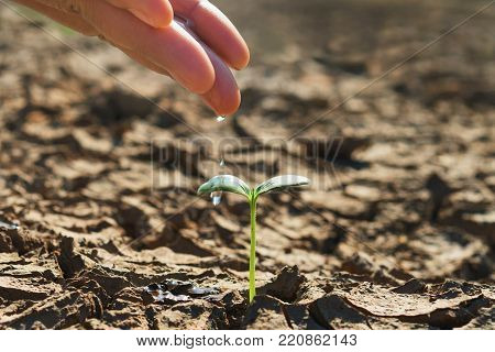 hand watering young green plant growing in soil arid