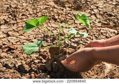 two hand planting the tree into soil arid concept green world
