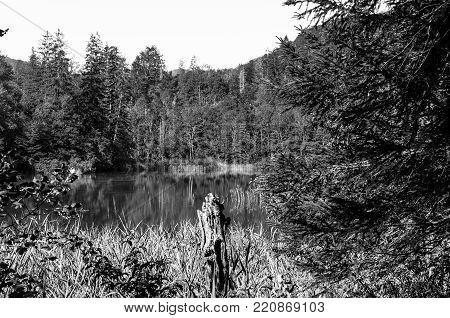 landscape of plitvicka lake national park, unesco heritage site, croatia. black and white
