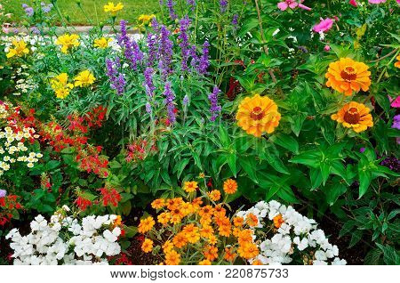 Flowerbeds ,beautiful background of bright garden flowers.