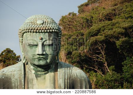 A head of Great Buddha or Daibutsu at Kotoku-in Temple in Kamakura, Japan